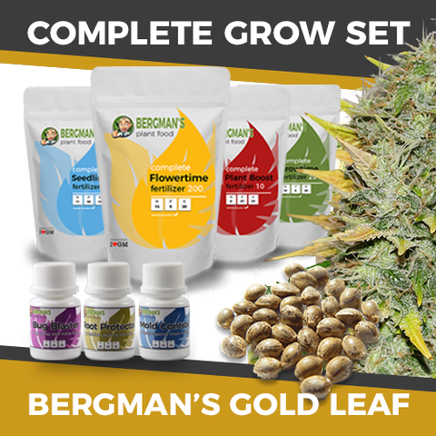 Cheap Gold Leaf Cannabis Seeds