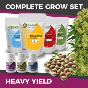 Cheap High Yield Cannabis Seeds