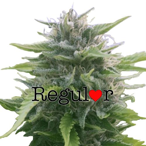 Harlequin Regular Cannabis Seeds