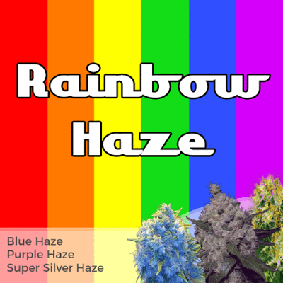 Rainbow Haze Mixpack Cannabis Seeds