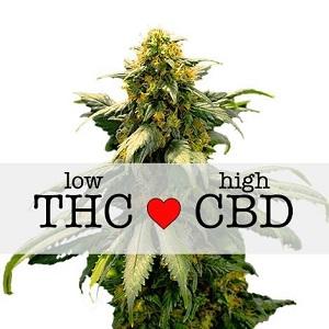 Harlequin Cannabis Seeds