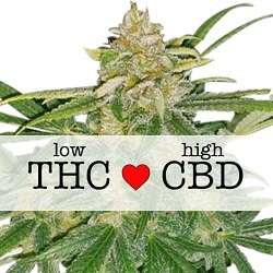 Critical Mass CBD Medical Cannabis Seeds