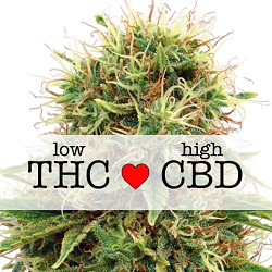 Kush CBD Medical Seeds