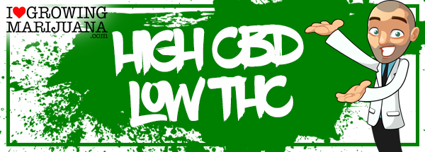 CBD Medical Seeds - High CBD Low THC