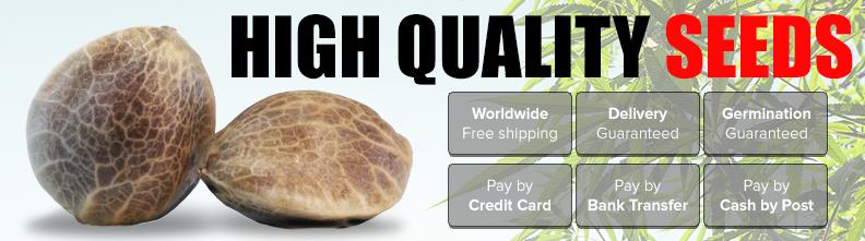 Buy Indoor Cannabis Seeds In Australia