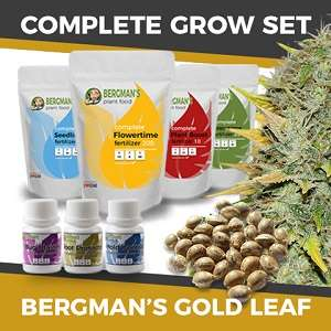 Complete Gold Leaf Seeds Grow Set