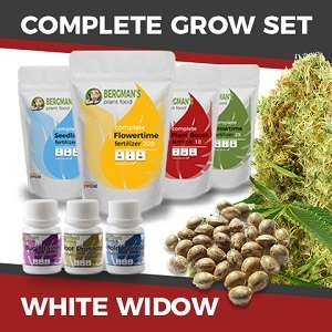 Complete White Widow Seeds Grow Set