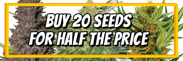 Buy 20 Cannabis Seeds For Half Price