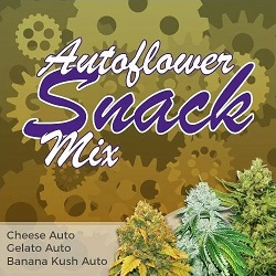 Autoflower Snack Seeds Mix