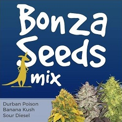 Bonza Seeds Mix